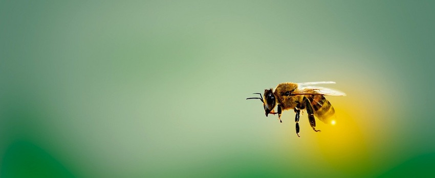Poznejte účinky manukového medu