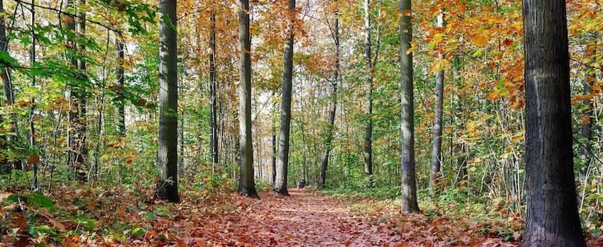 Přirodou proti podzimní únavě