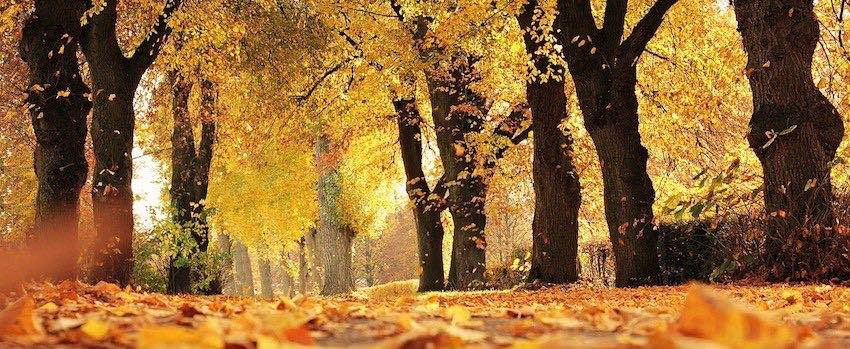 Podzim bez nachlazení
